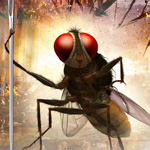 `Eega` to be screened at Busan film fest